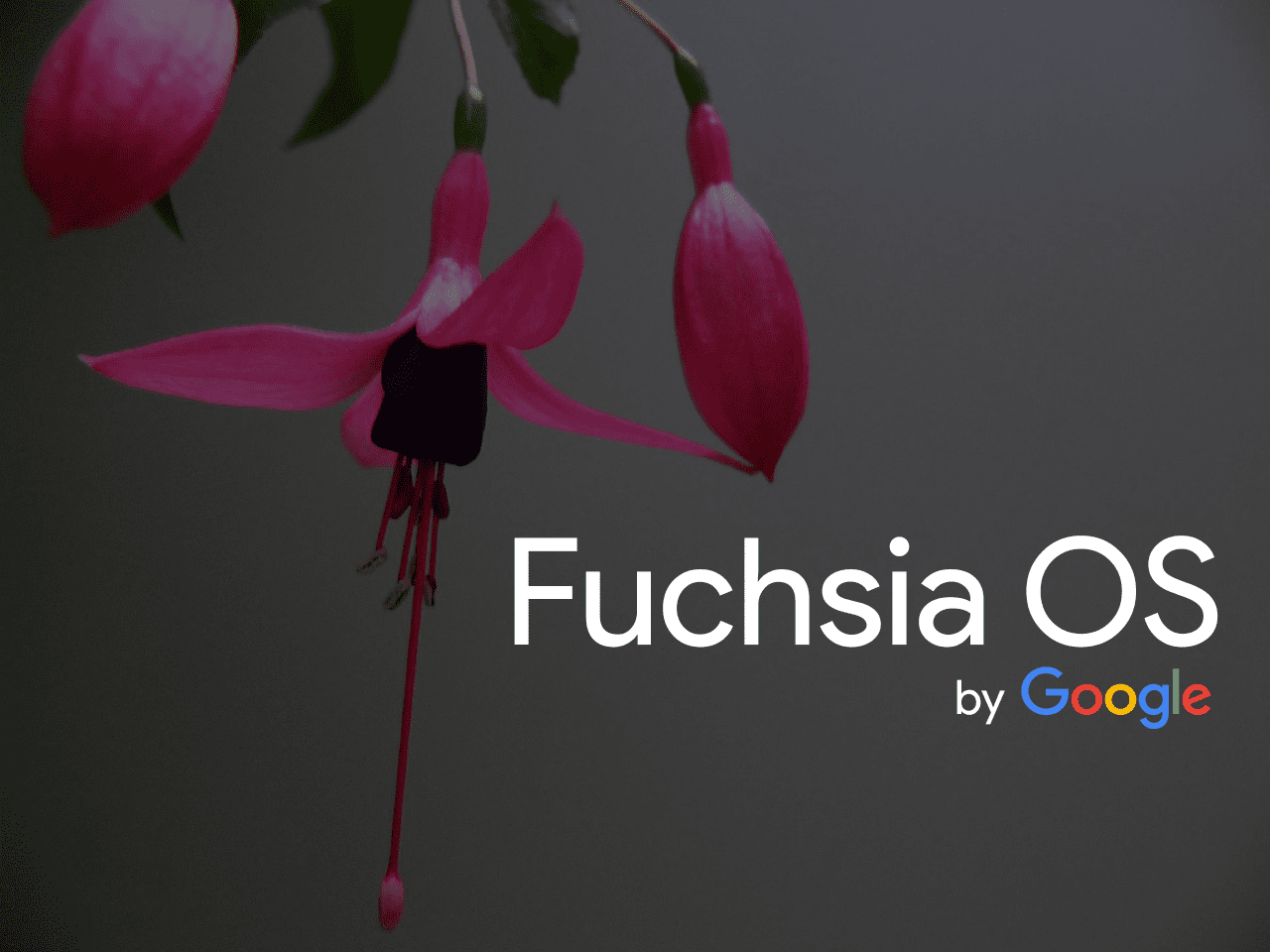 how google fuchsia may change your internet experience as you know it
