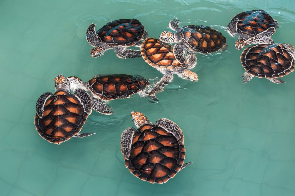 turtle-2159454_1920